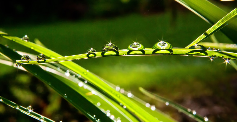 The rain drops reflect the patterns of the blade of grass, while the sun's reflection is captured within the star. The water drop's shadow is seen from the bottom of the blade of grass. Simply amazing!