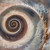 Spiral Seashell 1/4/17