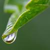 Rain Drop on a Leaf 5/1/16