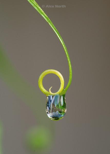 drop-macro2
