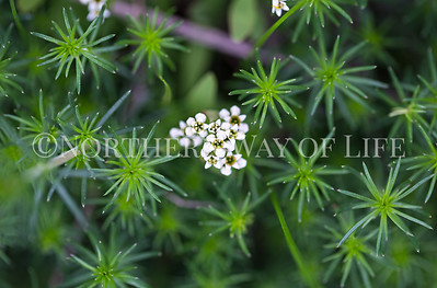 Delicate greens and flowers: Northport, Michigan