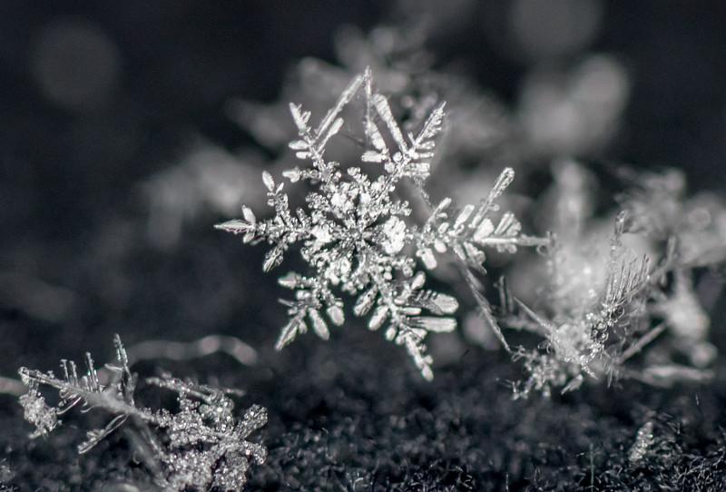 Snowflakes 1/5/17