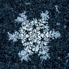 Frosty Snowflake 3/15/17