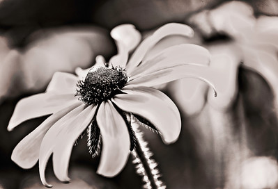 beauty and detail in black and white