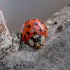 Ladybug 4/16/17