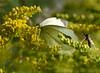 sommerfugl ps-035