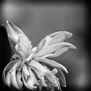 Floral mono abstract