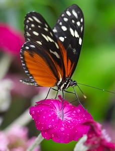 Butterfly on Bloom