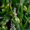 Morning Dew on Grass Blades
