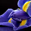 Iris Macro Dew Drops