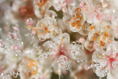 Tiny blooms with dew
