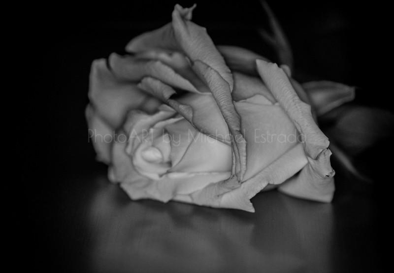 A Fallen Rose