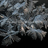 Frost Branches