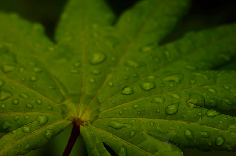 leaf, lines, texture, and rain