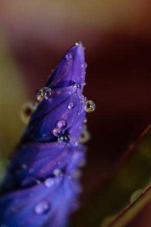 Rain droplets on closed flower