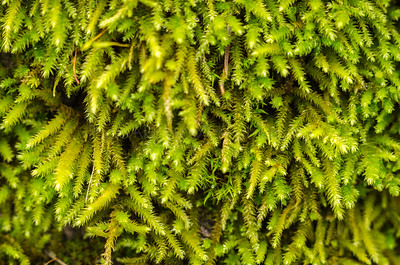 The Tiny World of Moss