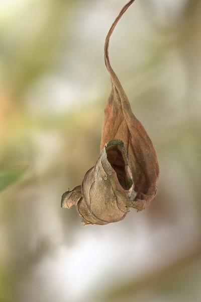 dead leaf 24