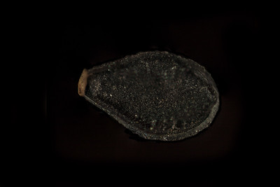Black sesame seed: about 2mm Focus stacking of 8 pictures.