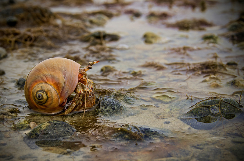 """Hermie, the Hermit Crab""<br /> August 3rd, 2012<br /> Demarest Lloyd Memorial State Park in Dartmouth, MA"