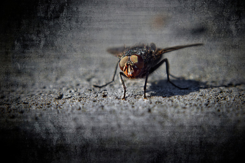 """""""The Fly""""<br /> February 23rd, 2012"""