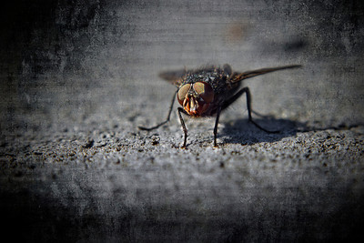 """The Fly"" February 23rd, 2012"