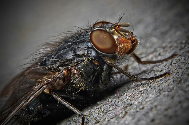 """Portrait of a Fly 2""<br /> March 24th, 2012"