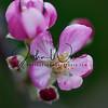 Macro flower pics