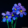 Wikdflowers