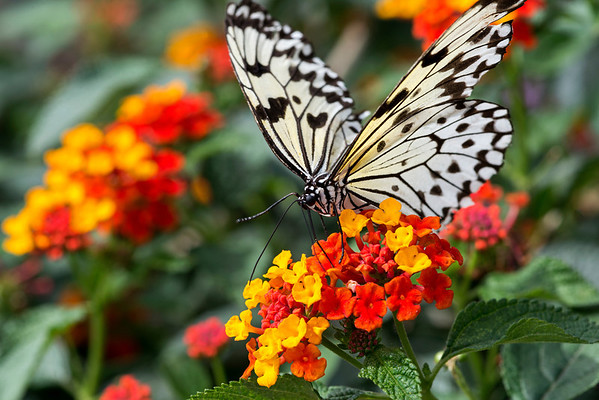 The Butterfly Zoo