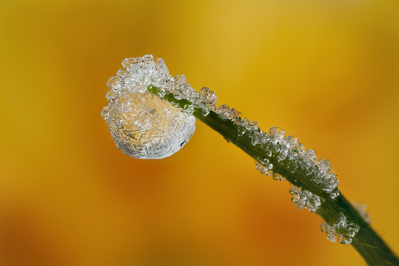 This is a focus stacked frozen dewdrop. <br /> shot at x4 magnification with canon mpe-65 macro lens.   the depth of field is so shallow at this high magnification that focus stacking is used to increase the dof to cover all parts of the frozen drop.