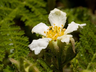 2005.05.24 Wildflowers @ Empire Mine