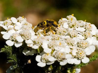 2005.07.23 Bugs 'n Wildflowers near home & Empire Mine