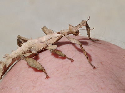 2007.04.30 Kirin's South American bug