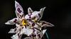 180210 - 4090 Orchids - Miami, FL