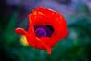 180703 - 6186 Poppy - Telluride, CO
