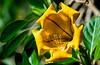 180210 - 3994 Cup of Gold Vine - Miami, FL