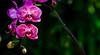 180210 - 4113 Orchids - Miami, FL