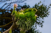 170408 - 0580 Succulent - San Diego, CA