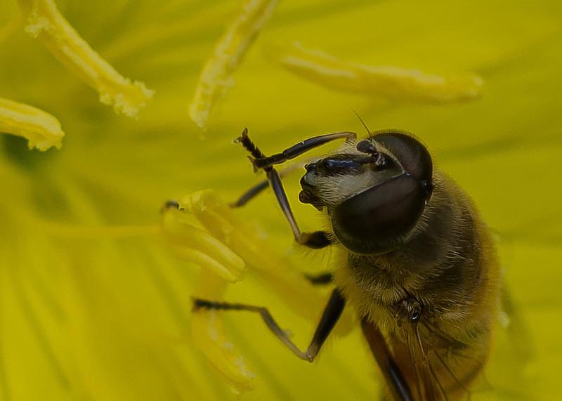A bee's eye view - taken inside the middle of a sun drop flower.