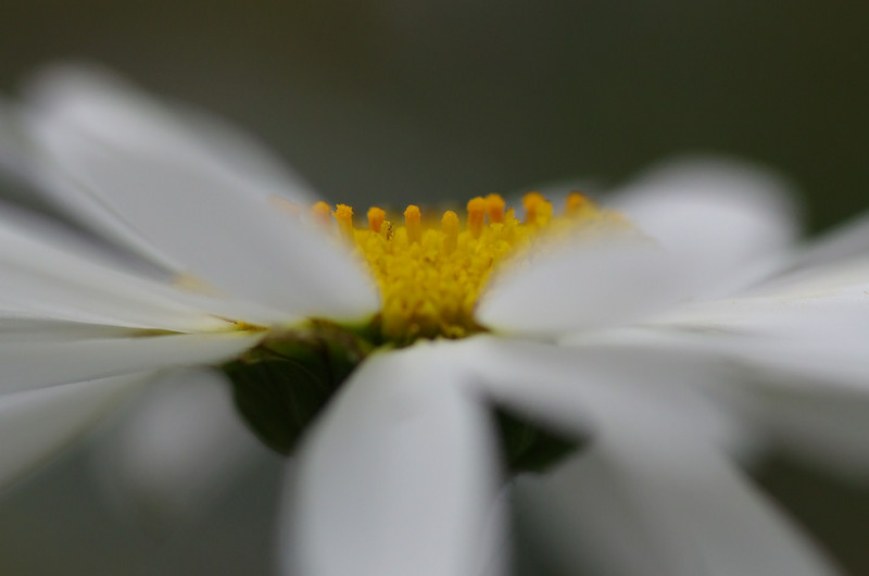 Look very carefully in the center of the daisy to see the tiny bug.