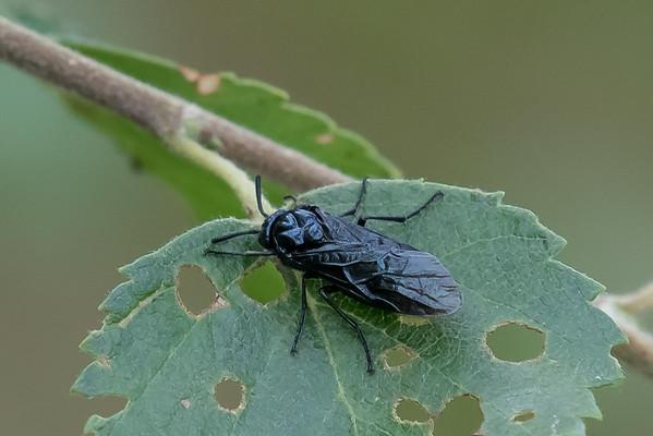 Sort flue