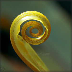 Natural spiral.
