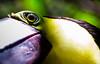 170319 - 9828 Tucan - Costa Rica