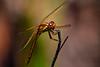 210424 - 3374 Dragon Fly