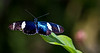 180210 - 4199 Butterfly - Miami, FL