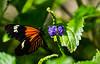 180210 - 4140 Butterfly - Miami, FL