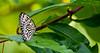 180210 - 4148 Butterfly - Miami, FL