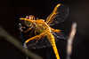 210424 - 3431 Dragon Fly