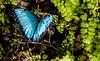 180120 - 3091 Butterfly - Miami, FL