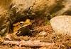 170319 - 9859 Frog -  Costa Rica
